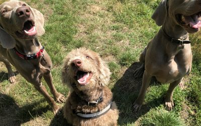 5 reasons you should be using a dog walker