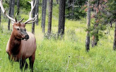 Product Review: Deer Antlers