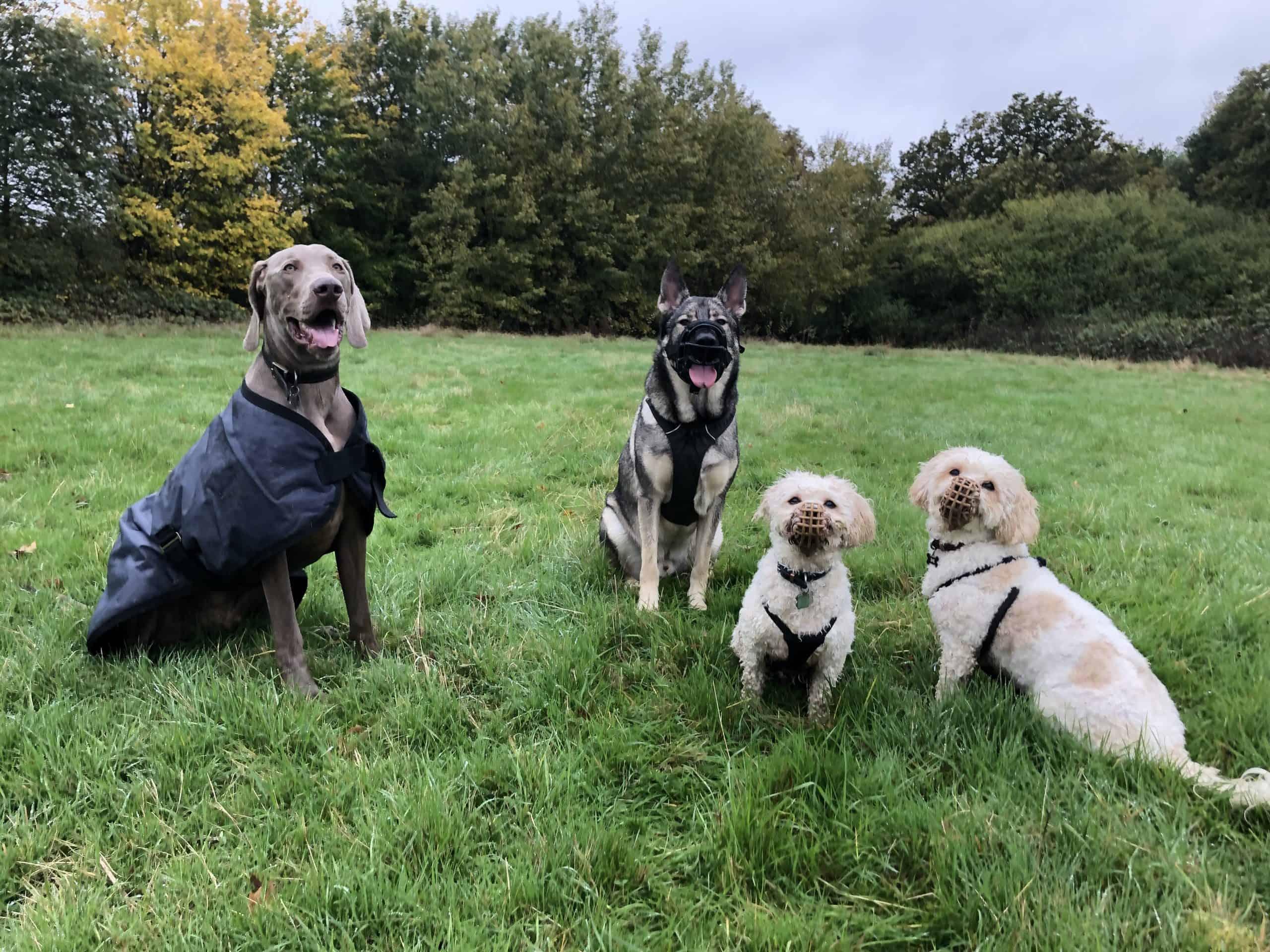 Parker, Indie, Louie & Oscar