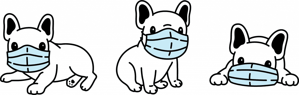 frenchies wearing face masks