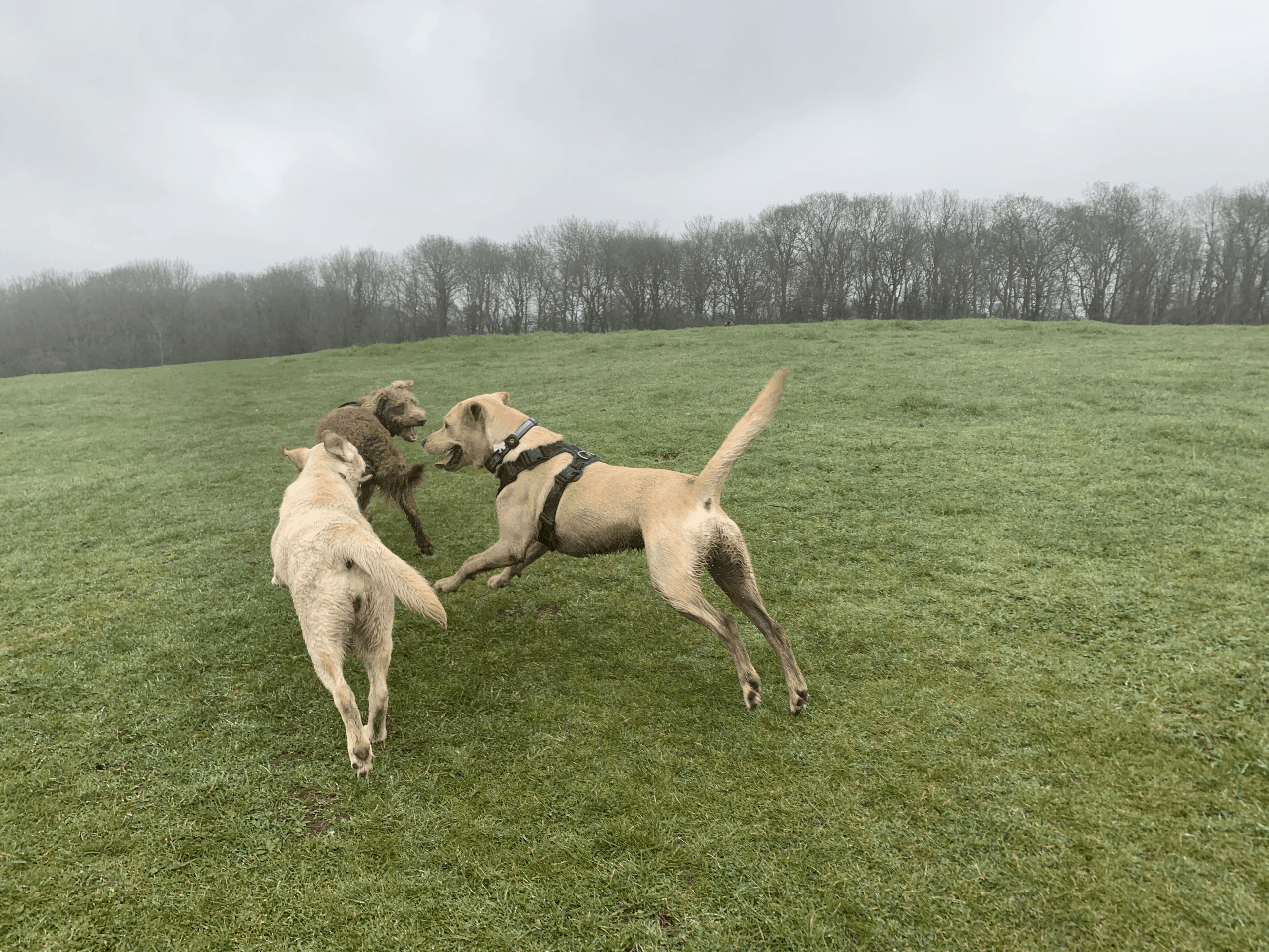 Play time!