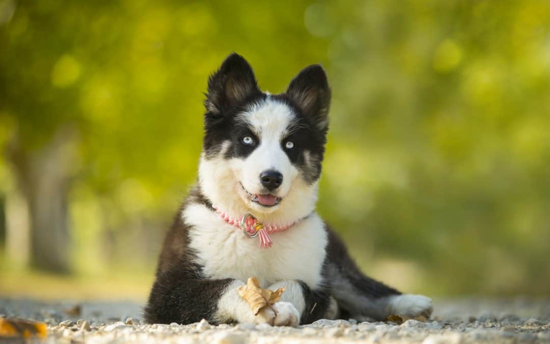 9 Dog Breeds You've Never Heard Of!