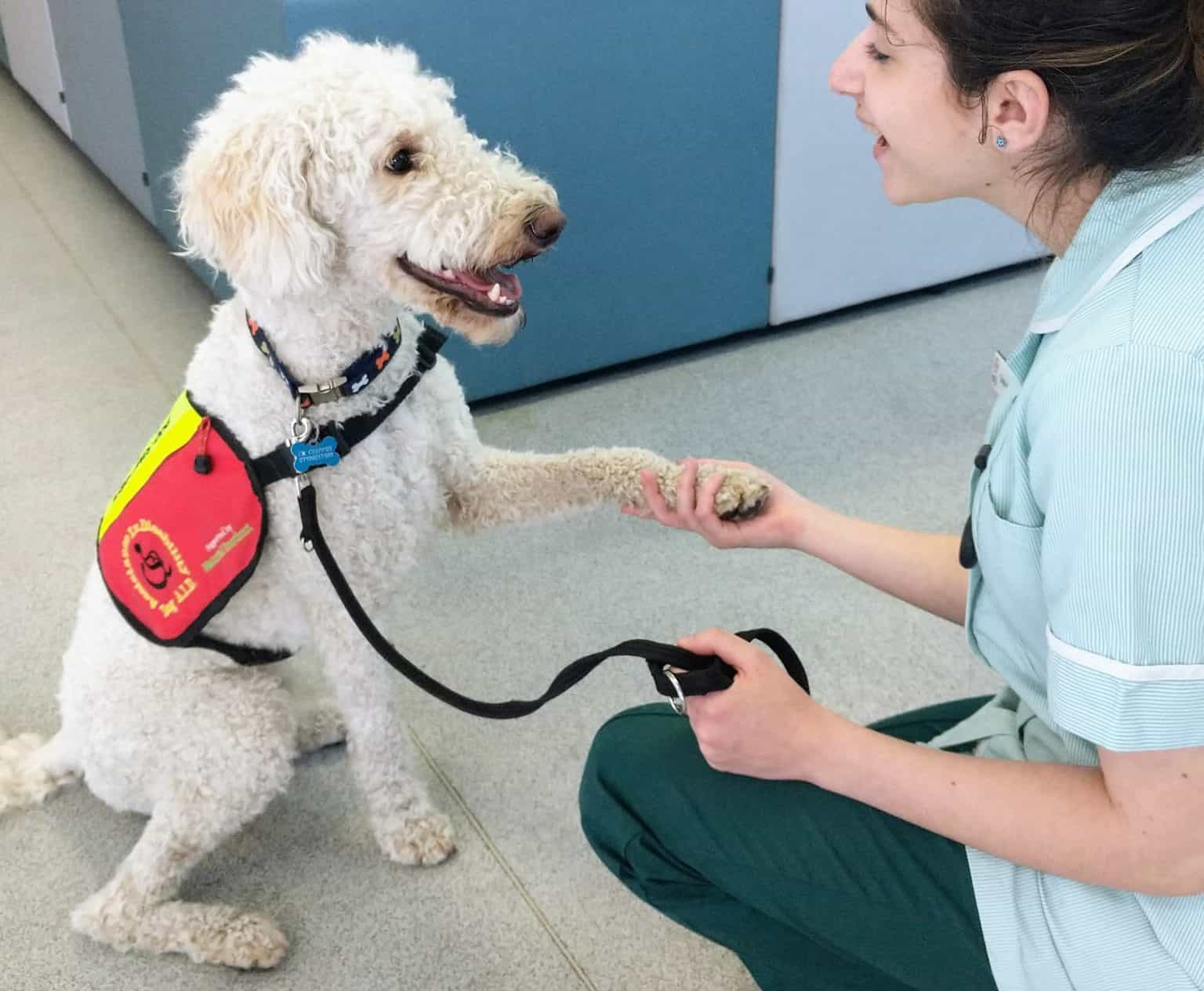 Coby the assistance dog