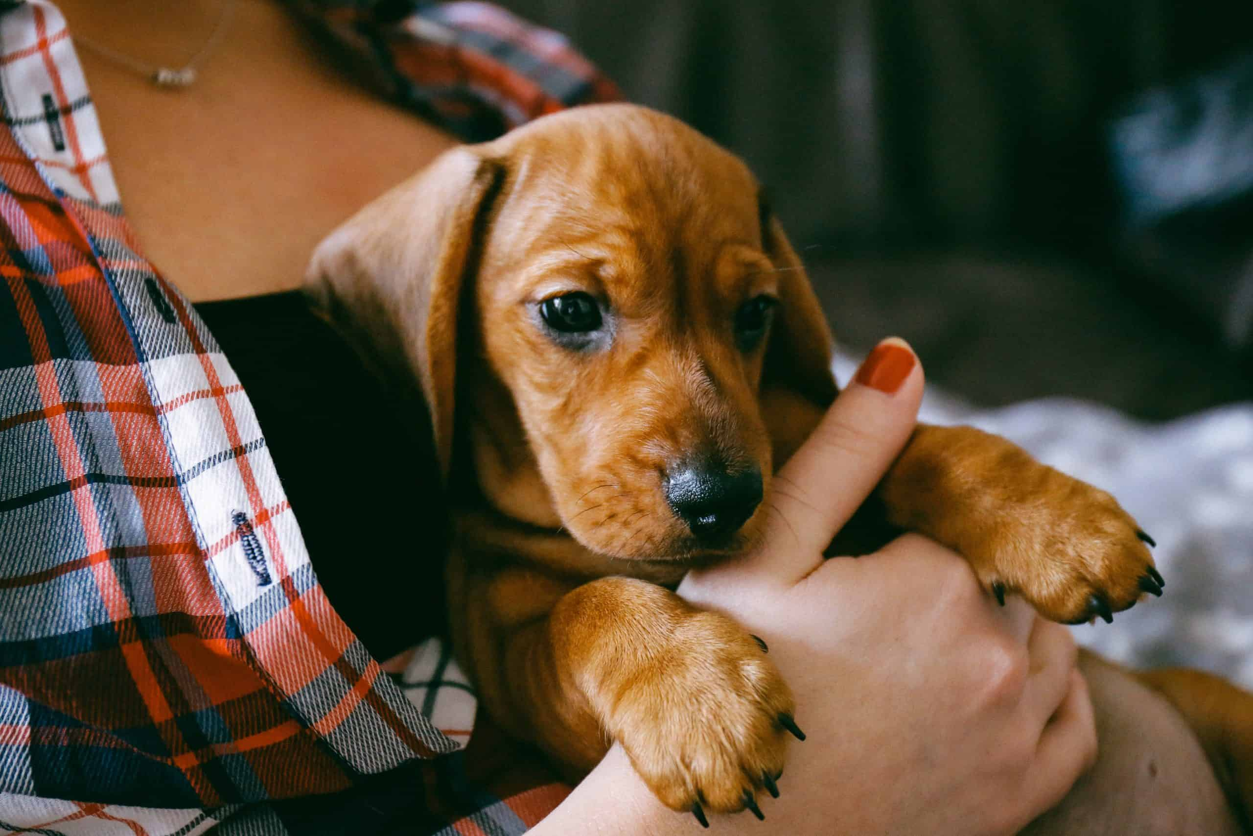 Puppy blues getting you down? We know that feeling